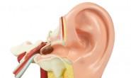 中耳炎危害不小 有6大危害